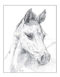 Horse Card  Hello Sunshine folded notecard by gigglesnortsociety, $20.00