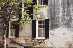 tree   shutters