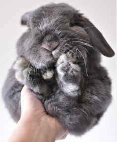 A handful of bunny cuteness