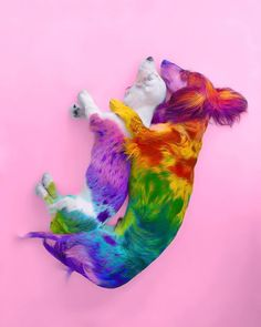 Ramzy Masri Turns The World Into a Rainbow Paradise 9 Baby Animals Super Cute, Cute Little Animals, Cute Funny Animals, Tier Wallpaper, Animal Wallpaper, Beautiful Cats, Animals Beautiful, Rainbow Dog, Baby Animals Pictures