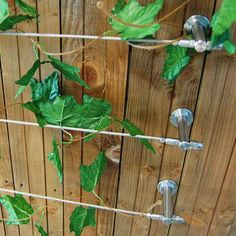 11 Great Jasmine Trellis Images Wire Mesh Creepers