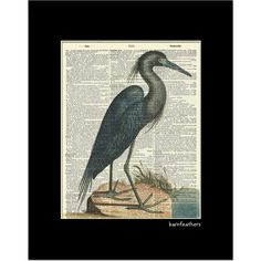 Blue Heron Illustration printed on an Old Dictionary Page - Book Page Art print No.P347