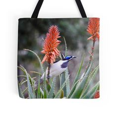 Blue-faced Honeyeater by BirdBags