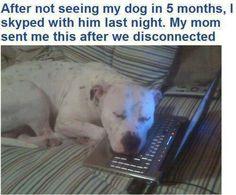 Aww, dogs yay