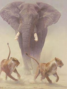 yeah, be afraid. Elephant!