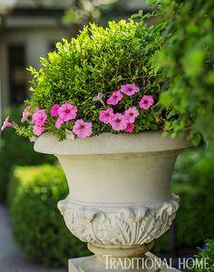 Violet 'Supertunia' petunias front Green Velvet boxwood. - Photo: Bob Stefko