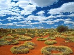 "Australia. There's something captivating about the land down under. All I know about this pic (besides the fact that I love it) is the caption here said ""Old Spinifex Rings, Little Sandy Desert, Australia""."