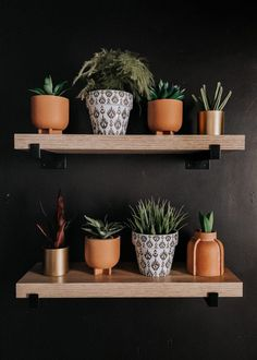 guest bathroom with black walls and a faux plant wall set up on shelves with black rod detail and terracotta pots with gold and texture design