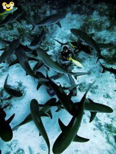 amazing pictures - scuba diving is exciting #deep #shark #diving #scuba #amusing #joke #funny - Funomenia