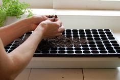Growing vegetables from seed.