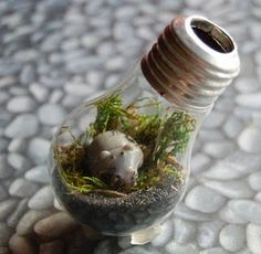 super cute little hippo terrarium!!
