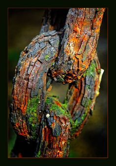 I love pictures like this! All that rust, with little mossy bits. And so much texture. by Periegese. Hmmm going to have to swipe my hubby's log chain now and rust it. Wabi Sabi, Rust Never Sleeps, Growth And Decay, Rust In Peace, Peeling Paint, Rusty Metal, Love Pictures, Macro Photography, Photography Themes