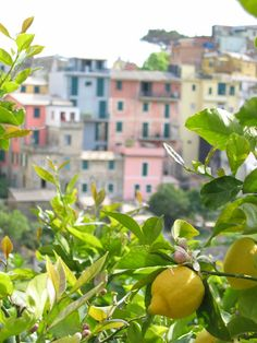 Best Summer Citrus Fragrance - Carthusia Mediterraneo Fragrance review