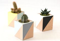 Woody planter - yellow & blue - for cacti and Succulents by Frausieben Wooden Planters, Indoor Planters, Planter Pots, Cement Crafts, Wood Crafts, Cactus E Suculentas, Wooden Words, Green Palette, Small Wood Projects