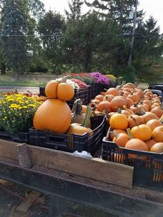 Grown in BaltCo: Hills Forest Fruit Farm