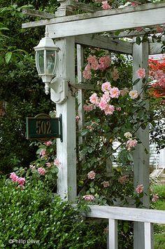 Spring Cottage Garden ~ Climbing Roses on Pergola✔zϮ