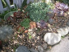 Yep, this is for me...river rocks at Dollar Tree and succulents...perfect desert garden.