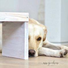 DIY Hundebar - eine Futterstation für den Hund selber machen Border Collie, Labrador Retriever, Dogs, Animals, Amy, Creative, Dog Things, Dog Feeder, Build A Bar