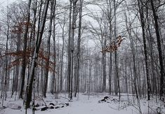 Winter Storm In The Forest - Hilton Conservation Area Ontario Canada