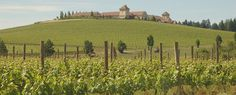 Vineyards are abundant in the Willamette Valley, where Oregon's famed pinot noir has captured the attention of wine connoisseurs around the world. Hire a limo for an Oregon wine tour or cycle a meandering scenic trail across the verdant countryside. See more information about wine tours at KeystoneVacationsOregon.com