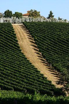 Vineyards of Scansano, Italy /// #travel #wanderlust