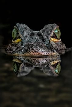 Biding--Alligator - by Michael Milfeit Les Reptiles, Reptiles And Amphibians, Mammals, Alligators, Beautiful Creatures, Animals Beautiful, Animals And Pets, Cute Animals, Frog And Toad