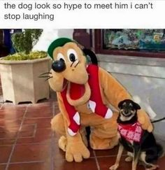 Funny Animal Memes Of The Day – 52 Pics - Lovely Animals World 32 Funny Animals Guaranteed to Make You Laugh This dog got tricked LOL 24 Funny Animal Pictures Of The Da. Funny Dog Memes, Funny Animal Memes, Cute Funny Animals, Funny Animal Pictures, Cute Baby Animals, Funny Dogs, Cute Dogs, Cat Memes, Funny Puppies