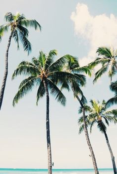 62 new Ideas photography summer nature palm trees Tropical Vibes, Tropical Paradise, Tropical Beaches, Tropical Style, Summer Vibes, Foto Transfer, The Beach, Summer Beach, Palmiers
