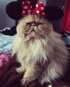 Minnie Cat