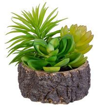 Pre-Made Succulent in Wood Slice By Ashland®
