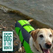 Meet Chance, our newest DGP Dog of the Month! Learn how DGP helped give him his stride back!