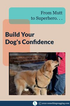 How do you build the confidence of a timid pup? Here's a few things to try. Dogs On Boats, Dog Anxiety, Kinds Of Dogs, Dog Training Tips, Anxious, Dog Treats, Pet Care, Need To Know, Sailing