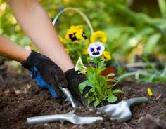 Gardening North shore are a family run business and has been working in Perth for over various years.