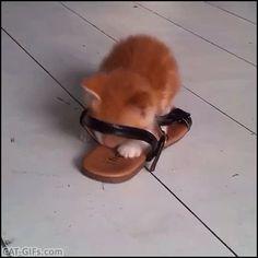 Diese Katzen Machen Backe Backe Kuchen D Supergeil Einfach Zum