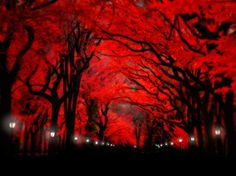 tree photography red and black nature by nataliemikaels on Etsy, $25.00
