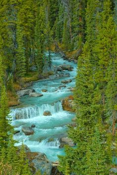 Jasper National Park - Alberta, Canada | Nature Board