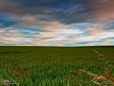 field-flowers-scotland--w.jpg 1,600×1,200 ピクセル