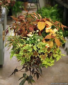 Hanging+baskets+extend+a+touch+of+the+garden+to+your+home.+Or,+hang+them+outside+on+your+patio,+off+your+deck,+or+even+from+a+tree.