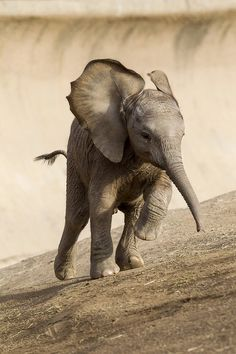 A baby elephant a day keeps the psychiatrist away