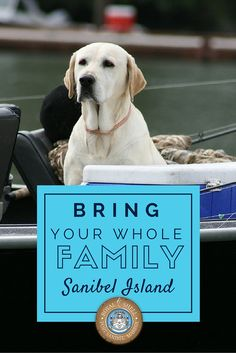 From beautiful beaches to fishing, there is so much to do on Sanibel Island. It's the perfect dog-friendly destination on the Gulf Coast of Florida. #Sanibel