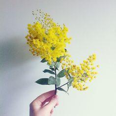 El otro día paseando me encontré con las primeras mimosas. Su olor me trae recuerdos de cuando era pequeña y jugábamos en el jardín de casa...