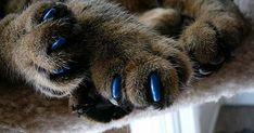 антицарапки для кошек на когти фото
