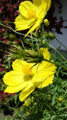 Bella flor.