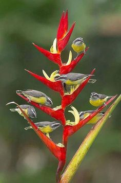 Beautiful birds of paradise flower and beautiful birds! Kinds Of Birds, All Birds, Love Birds, Exotic Birds, Colorful Birds, Exotic Flowers, Yellow Birds, Pretty Birds, Beautiful Birds