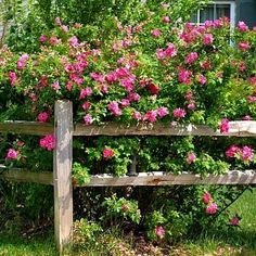 31 Best Wood Fencing Ideas Images On Pinterest Fence