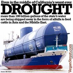 drought-stricken California using billions of gallons of water to feed cattle in Asia and the Middle East; not sustainable #vegan