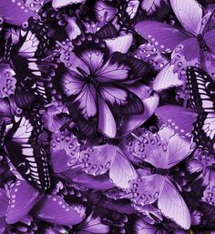 Butterflies Bunches Colorful Violet picture and wallpaper Purple Love, Purple Lilac, All Things Purple, Shades Of Purple, Deep Purple, Purple And Black, Purple Stuff, Purple Glitter, Papillon Violet