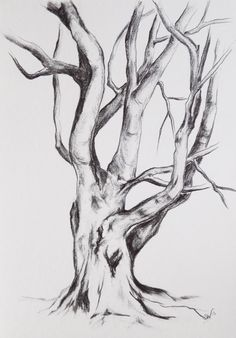 Original graphite drawing Tree drawing tree por BohemianInkStudios