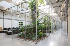 Glasshouses double as informal meeting spots inside this former warehouse, which has been converted into offices for a pushchair company by Space Encounters