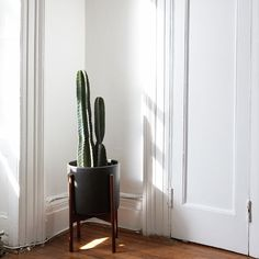 The Sill - Cacti Gift Delivery for New York City and NYC